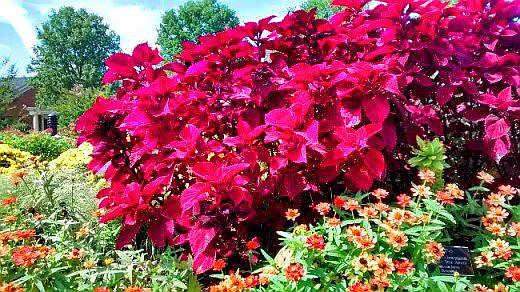 Lewis Ginter Botanical Garden flowers